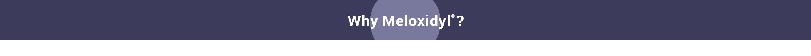 WhyMeloxidyl-Slider-5